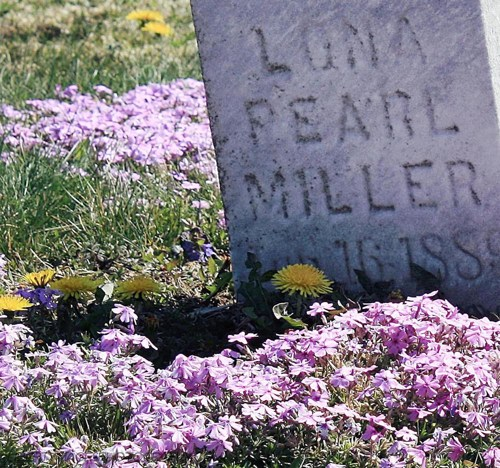 headstone_purple_flowers_love_of_lona_pearl_5x7_spring_cemetery_photo_81b5e15b